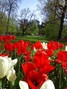 messer tulipano 10